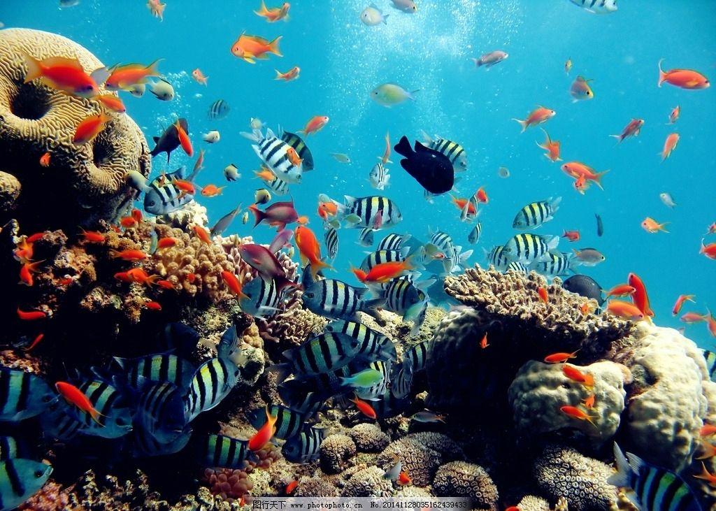 唯美海洋动物图片