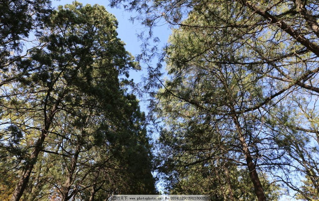秋冬 落叶 枯落 树 蓝天 摄影 生物世界 树木树叶 72dpi jpg