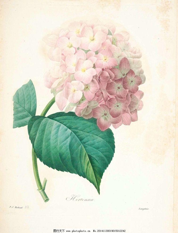 花类图鉴 植物手绘 田园 装饰画 墙画 未分层