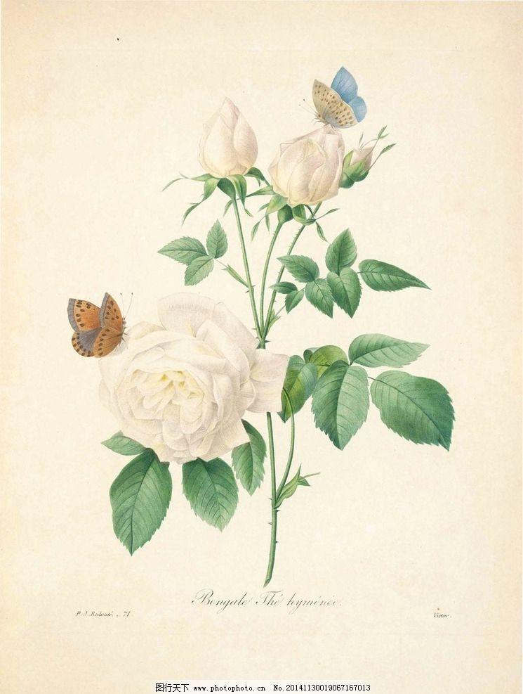 花类图鉴 植物手绘 田园 装饰画 墙画 未分层 文化艺术 绘画书法