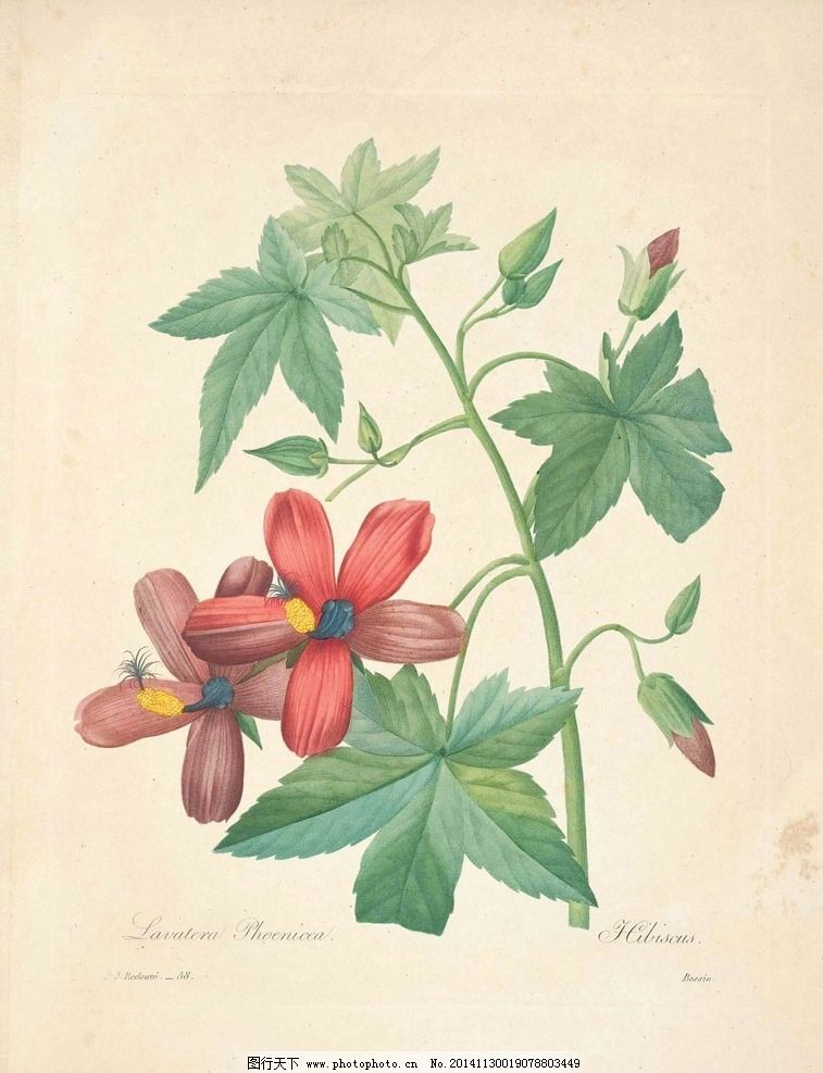 花类图鉴 植物手绘图片_绘画书法_文化艺术_图行天下