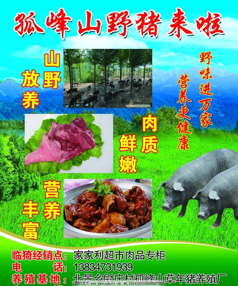 孤峰山野猪宣传单 山猪 黑猪 土猪 猪肉