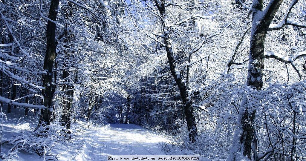 林海雪原 冰雪 森林 兴安岭 冰天雪地 冰雪森林 冬天森林 冬天
