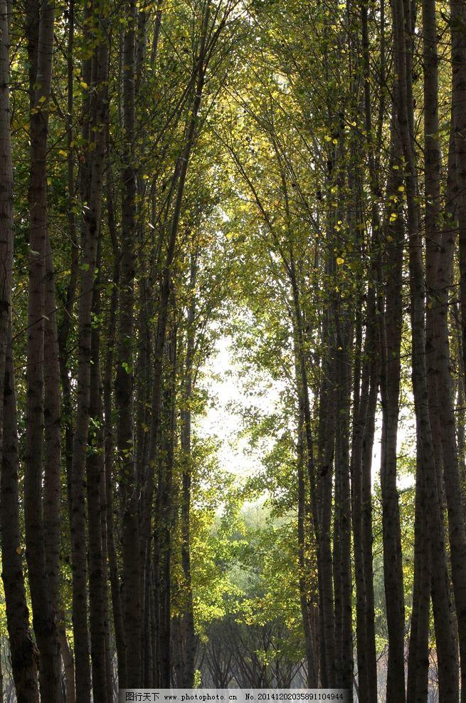 公园 树林 幽静 拱门 光影 大运河森林公园的秋天 摄影 生物世界 树木