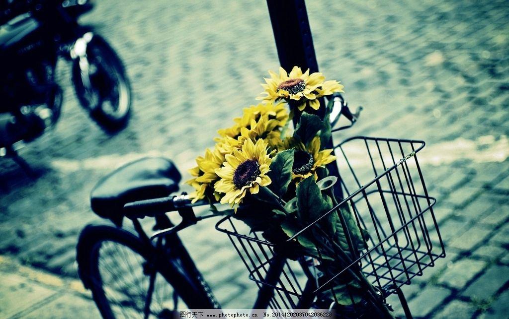 交流唯美浪漫自行车-交流唯美图片