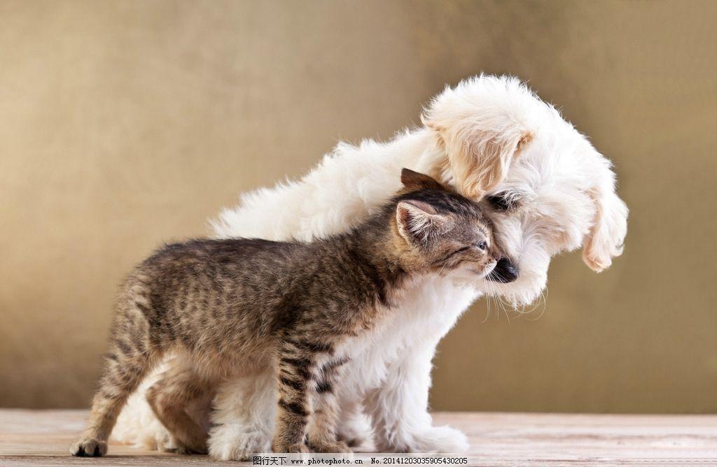 宠物猫狗 宠物 狗狗 宠物狗 家庭成员 猫咪 可爱 动物 摄影 生物世界