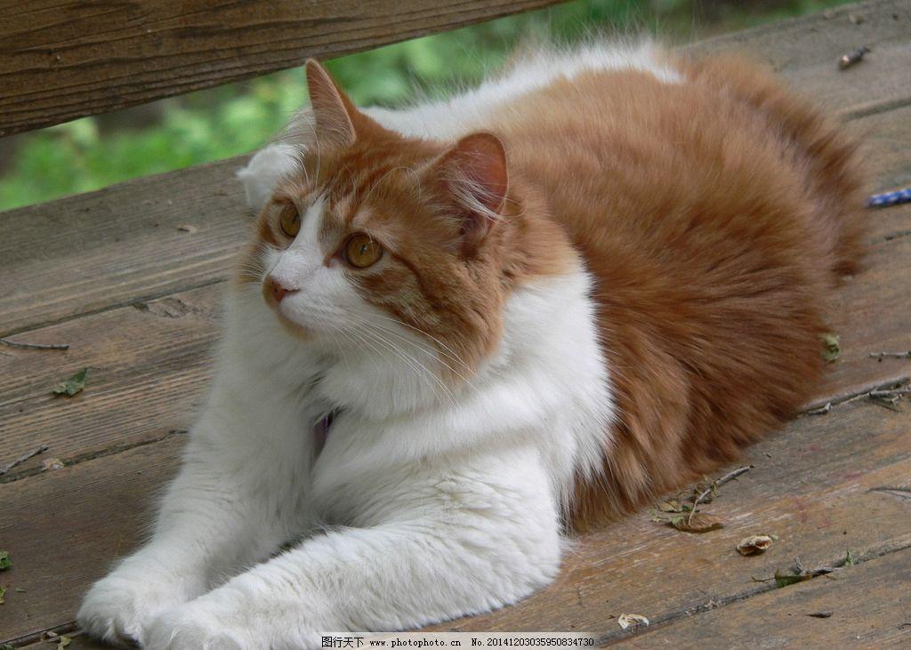 猫咪 玩耍 大猫 小猫 中国家猫 可爱 摄影 动物