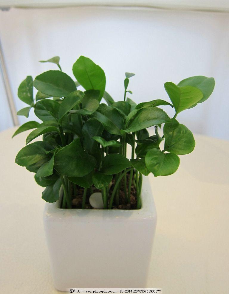 盆栽 绿植 室内植物 绿色 清新 摄影 生物世界 花草 180dpi jpg