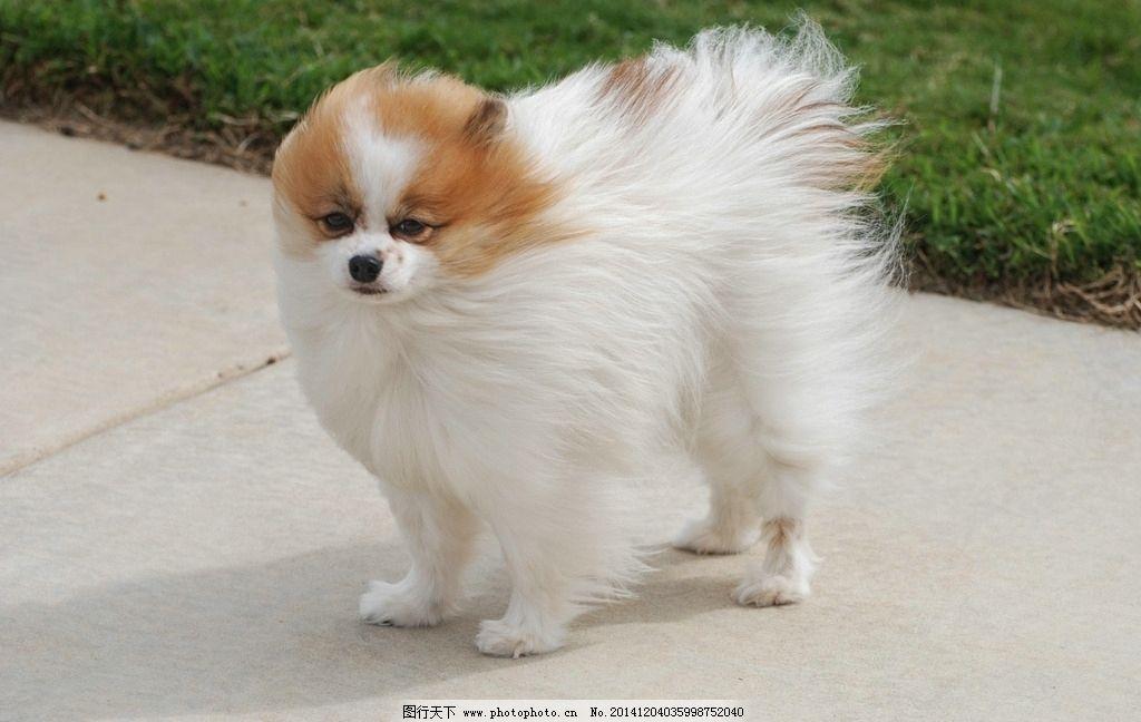 动物 大狗 狗狗 摄影 jpeg 生物世界 家禽家畜 家狗 可爱 宠物 犬类