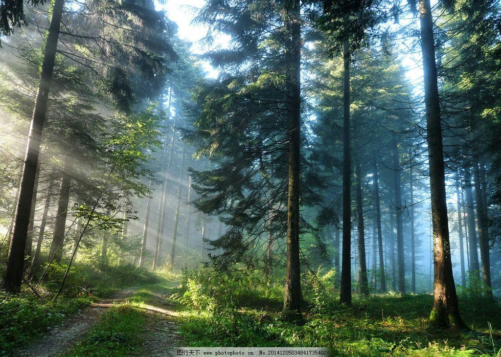阳光 光线 树 树林 森林 雾 风景 唯美 自然风景 摄影 自然景观 自然