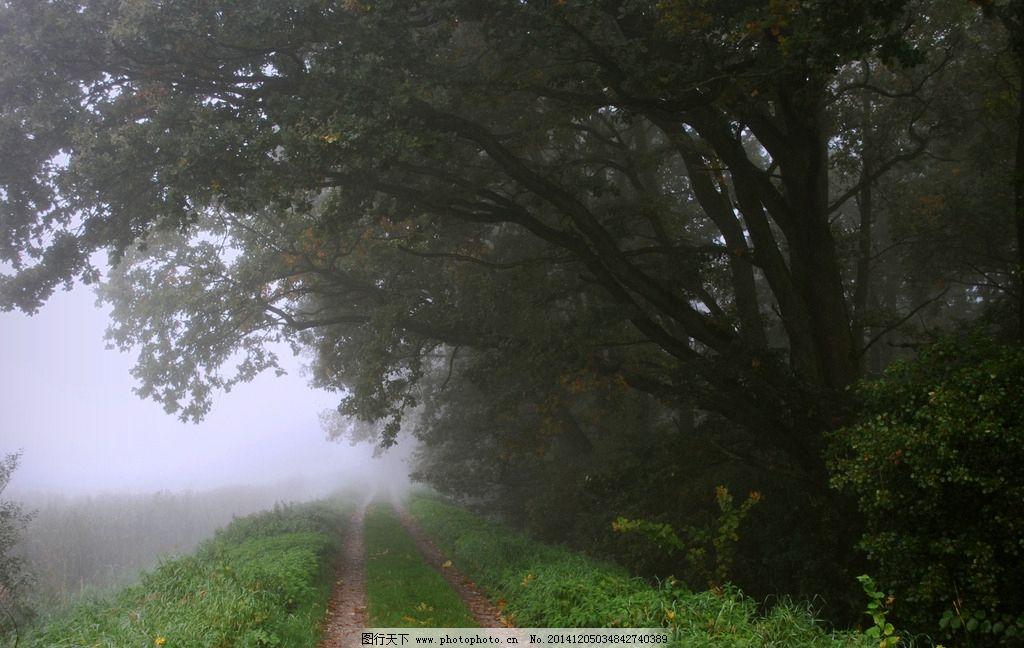 树 树林 森林 雾 风景 唯美 自然风景 摄影 自然景观 自然风景 300dpi