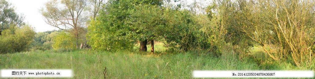 自然森林图片