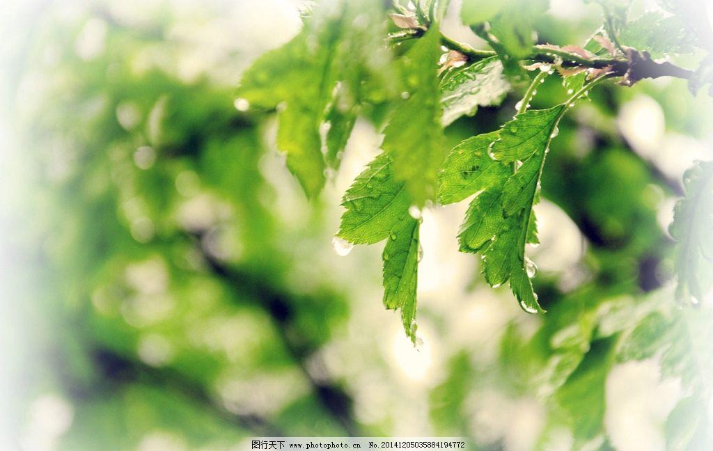 树枝图片_树木树叶_生物世界_图行天下图库