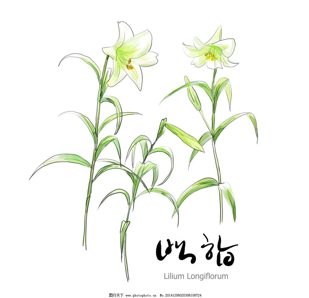 花朵 植物 高清 矢量 树 树叶 果园 花卉 素描 写真 手绘花儿