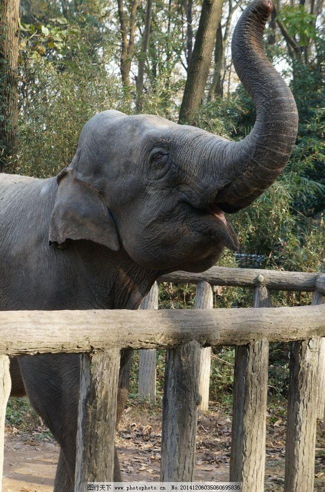 动物园 泰国 最大的动物