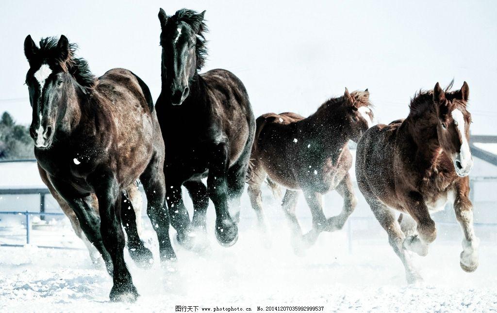 骏马 动物摄影 马 奔跑中的骏马 动物素材 家禽家畜 生物世界 摄影