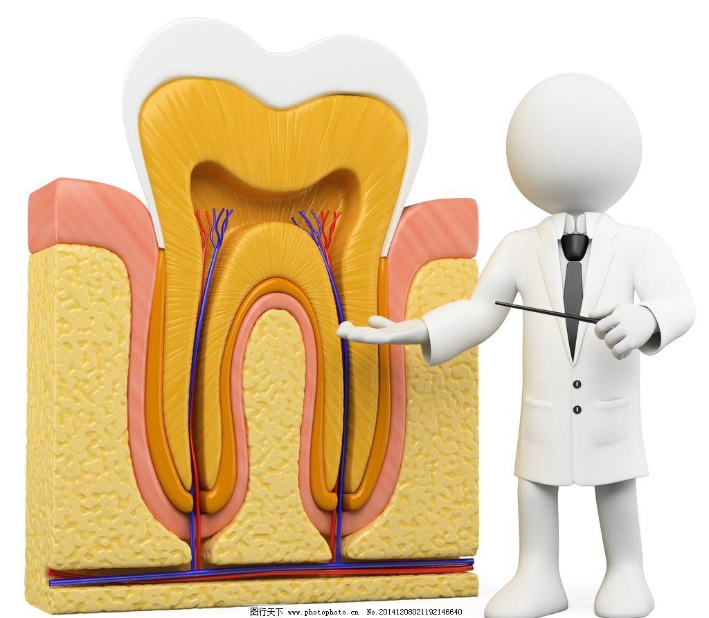 3d 牙医 牙齿 牙齿结构