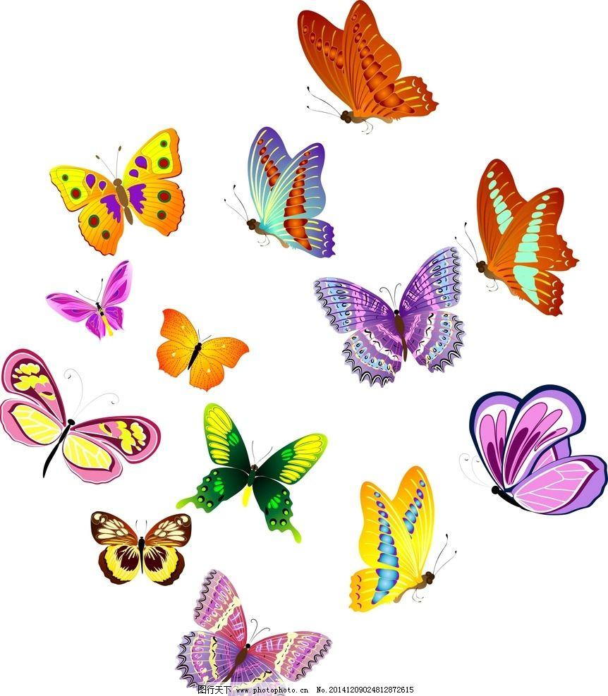 矢量蝴蝶图片