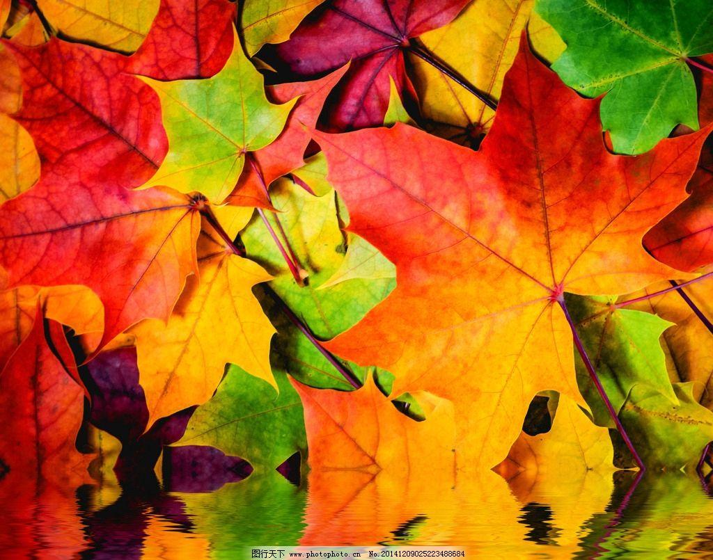 水中树叶 水中叶子 水纹 倒影 枫叶 水中倒影 水波 秋叶 叶子倒影