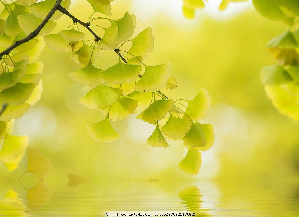 水中树叶 水中叶子 水纹 倒影 绿叶 绿色 水中倒影 水波 叶子倒影