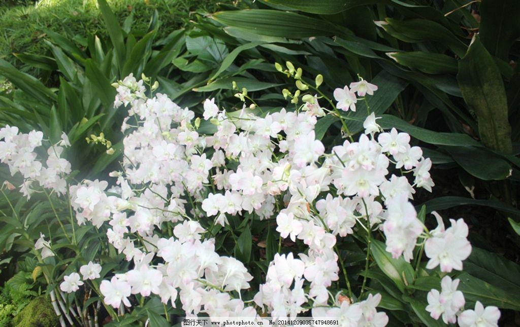 兰花 绿色 风景 新加坡 植物园 鲜花 花朵 游学 旅游 风光