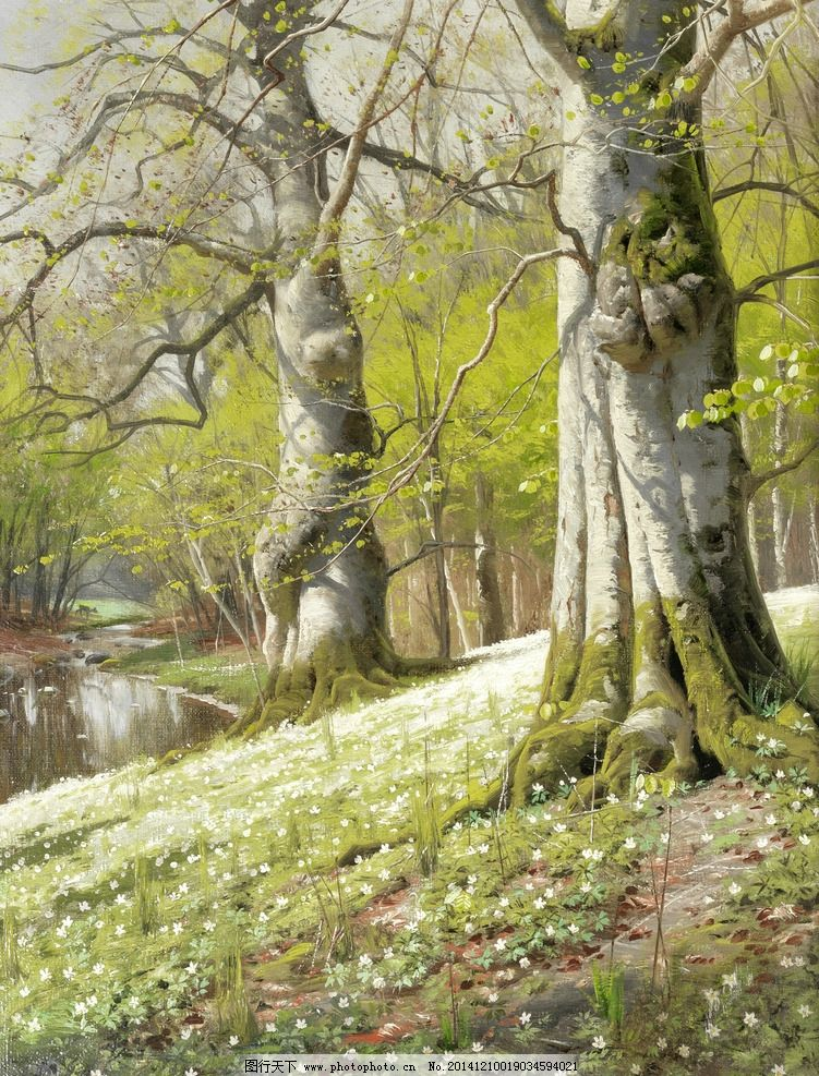树林 新绿一片 初春时节 嫩绿的树芽 草地 盛开 小白花 两颗 又高又粗