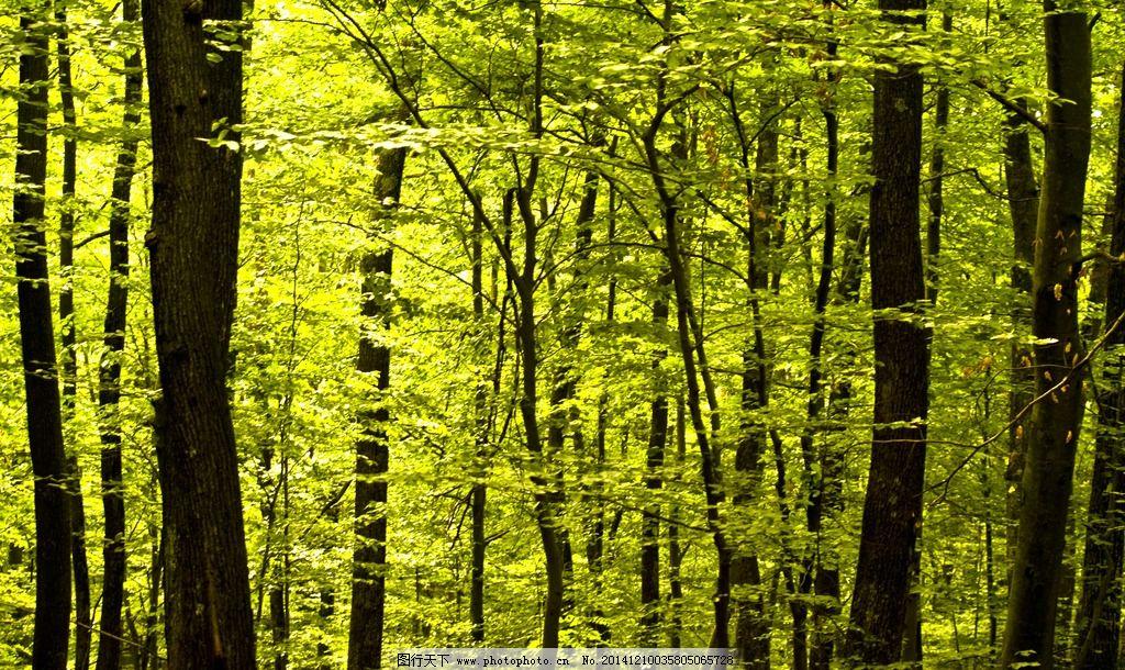 森林图片_树木树叶_生物世界_图行天下图库