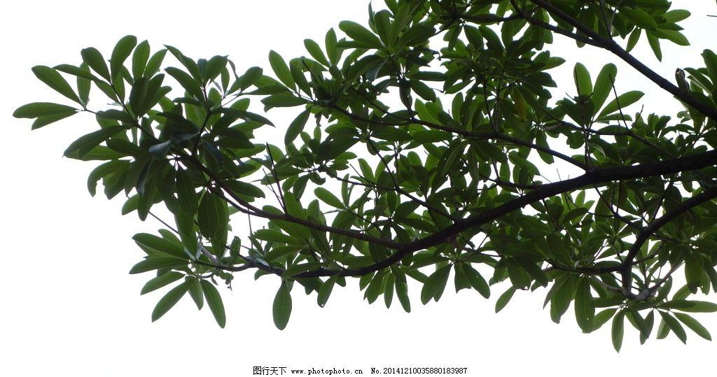 蓝天 白云 树枝 翠叶 河边 玉溪 摄影 生物世界 树木树叶 350dpi jpg