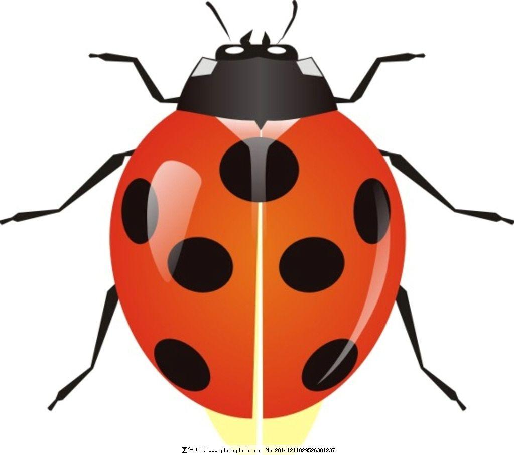 甲壳虫 卡通瓢虫