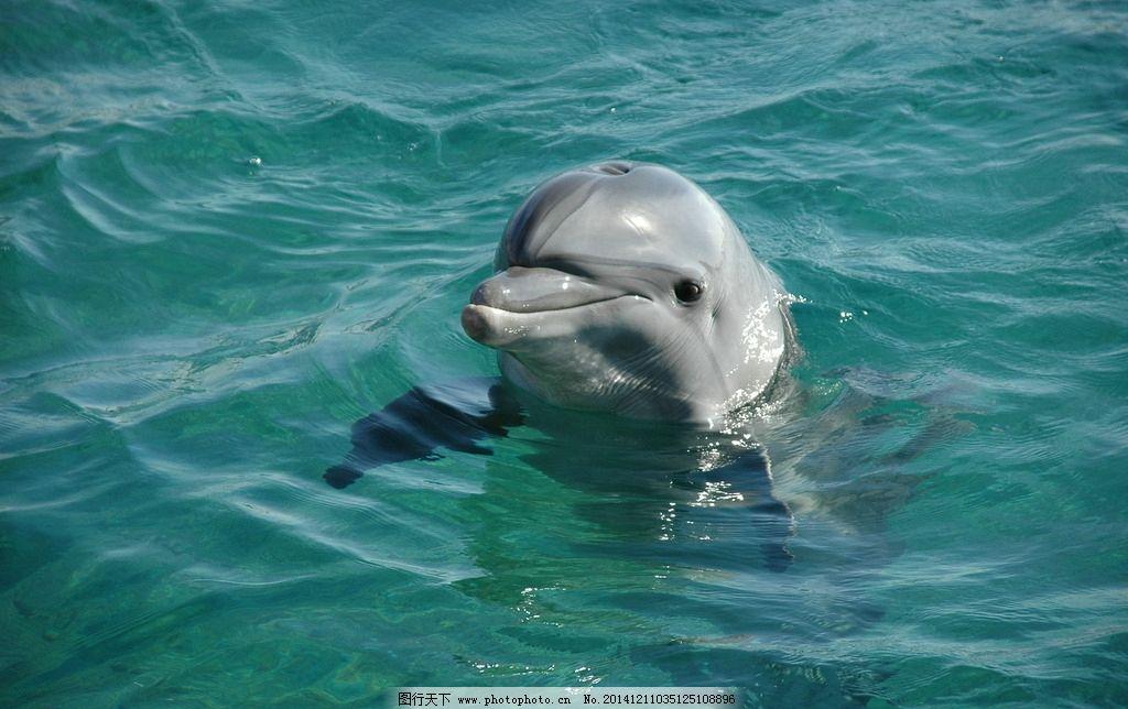 海豚素材 海豚图集 生物世界 摄影 动物 jpg 动物 摄影 生物世界 海洋