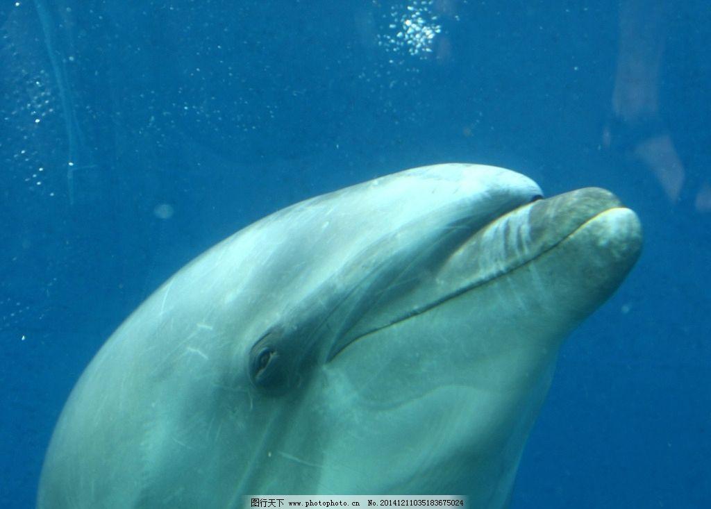 海豚 可爱 聪明 海洋生物 海豚摄影 海豚图片 海豚素材 海豚图集 生物