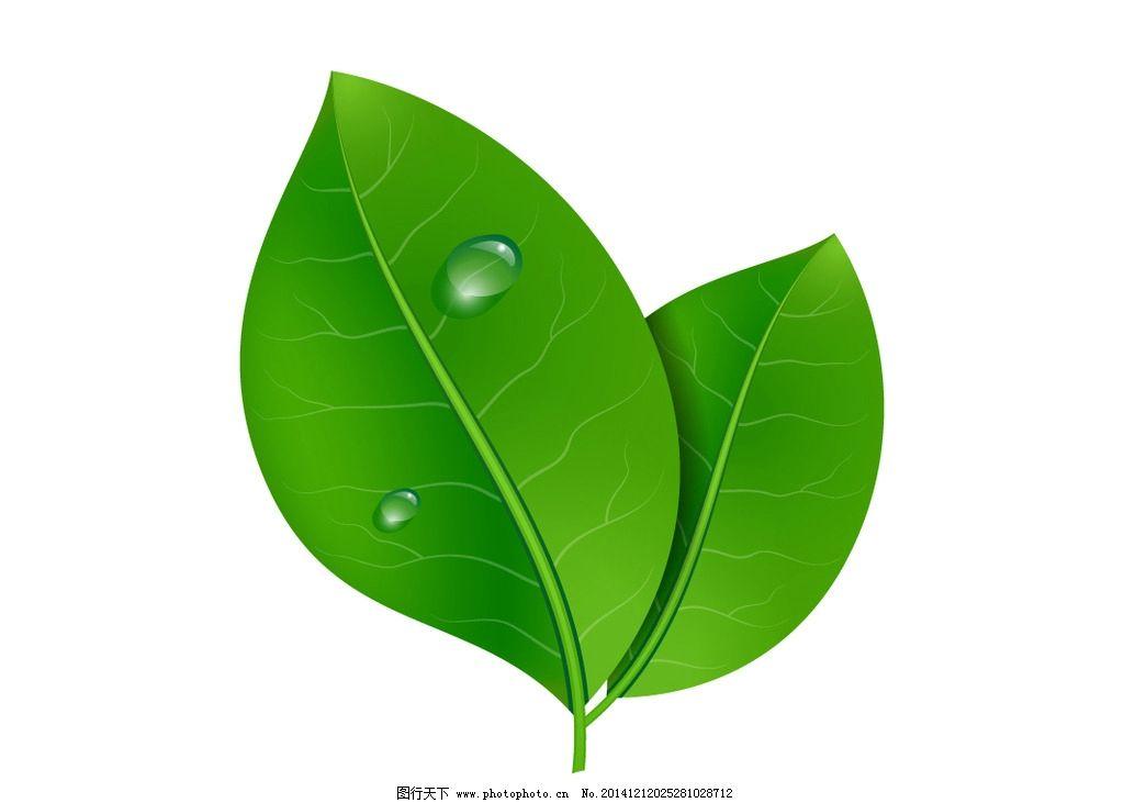 绿叶图片_树木树叶_生物世界_图行天下图库