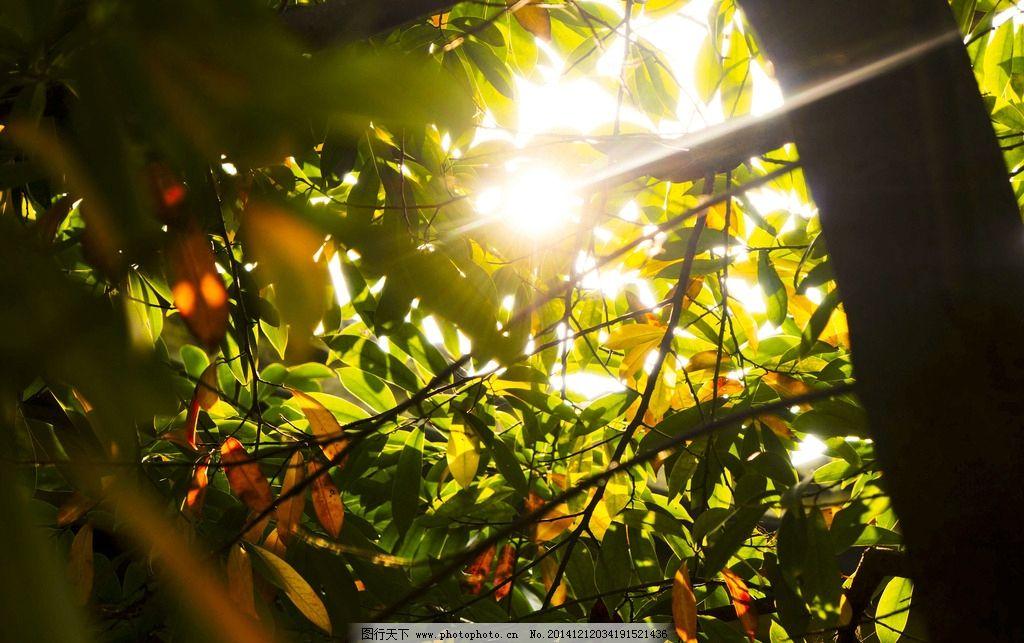 光影下的树叶 阳光 红叶 老树 旅行 风景 漂亮 漂亮的光影 摄影