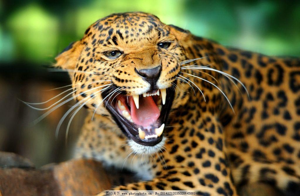 狮子老虎豹子等野兽看到自己的样子也被吓坏了