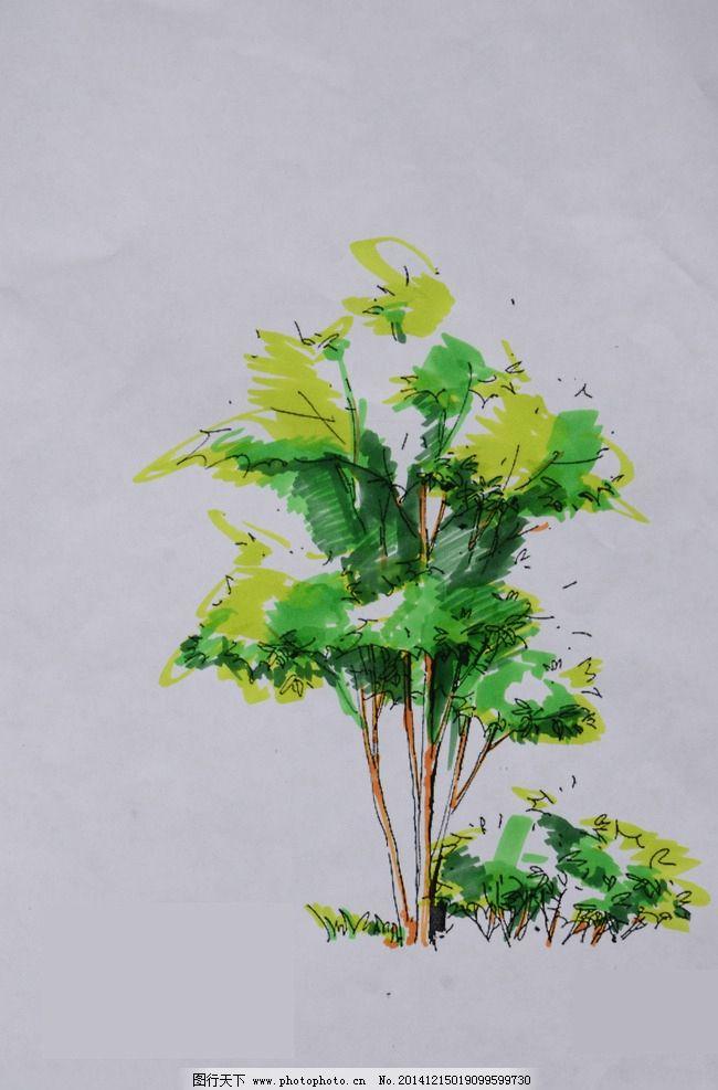 手绘植物 景观手绘 景观手绘素材