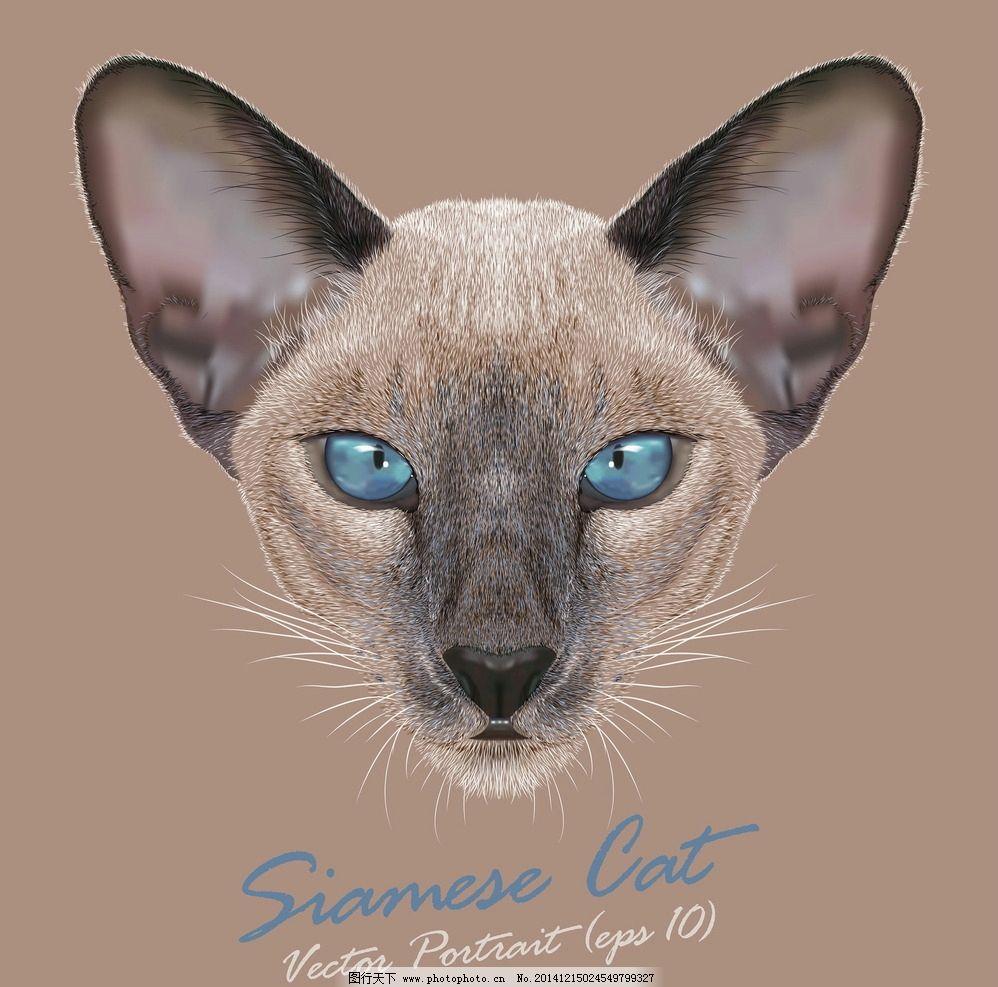 宠物猫 手绘动物 逼真小猫 宠物 猫咪 野猫 手绘猫 美术绘画 猫 家禽