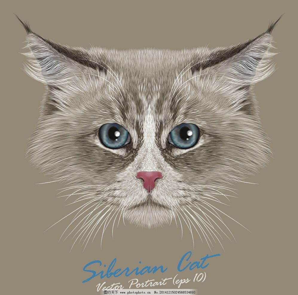 手绘逼真小猫图片