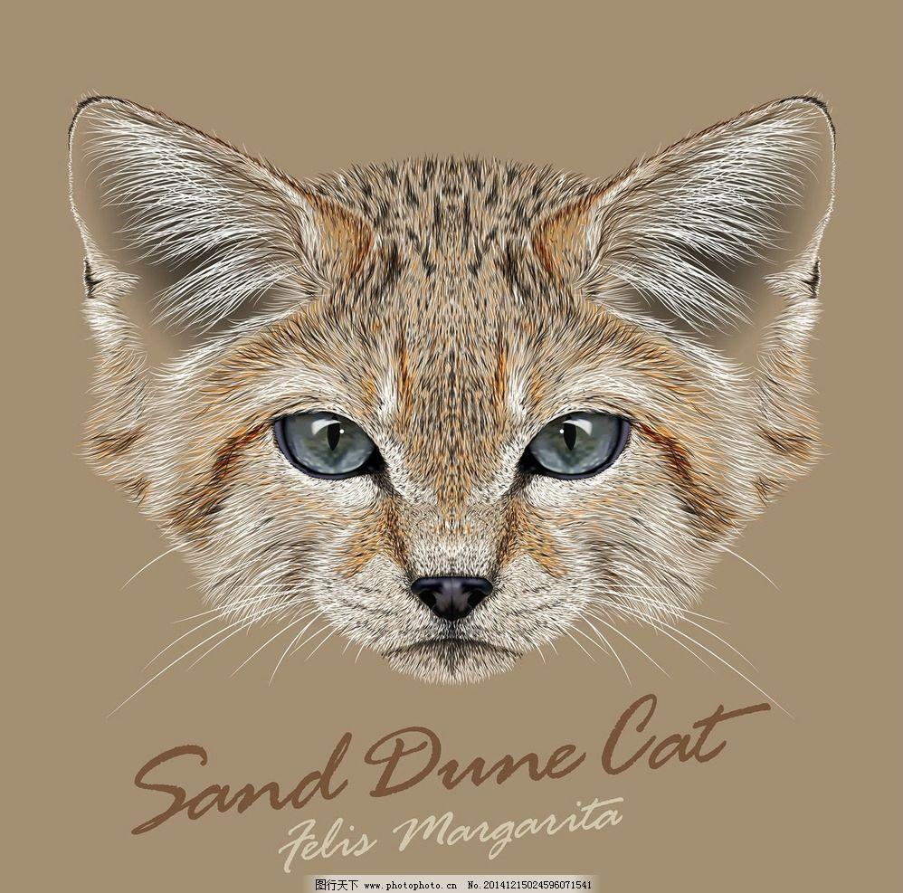 手绘逼真小猫 宠物猫 宠物 猫咪 美术绘画 猫 家禽家畜 生物世界 设计