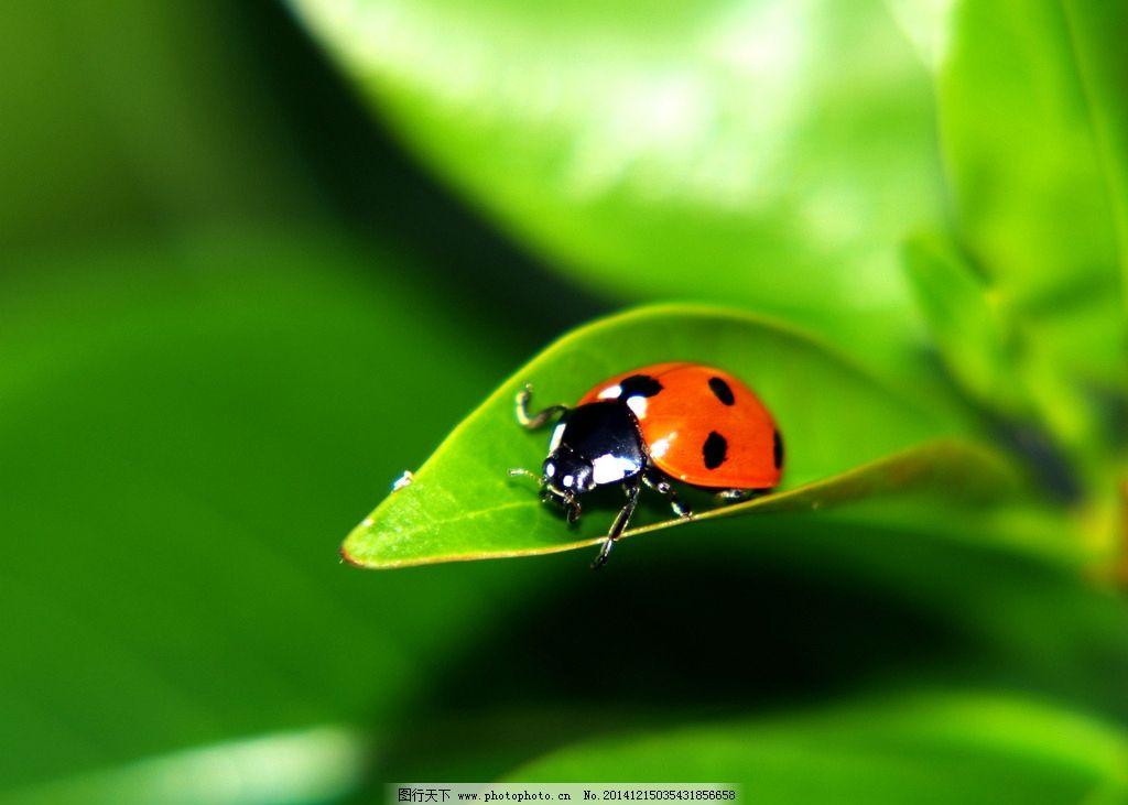 虫子图片_昆虫_生物世界