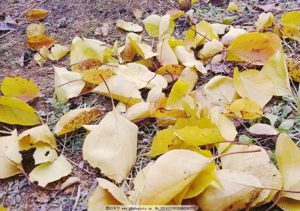 落叶 秋天图片图片