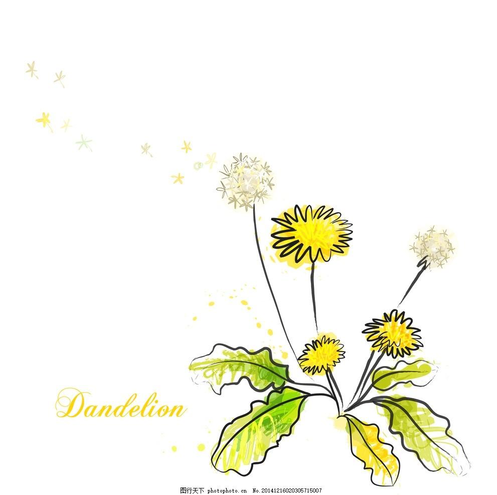 手绘矢量蒲公英线条花朵