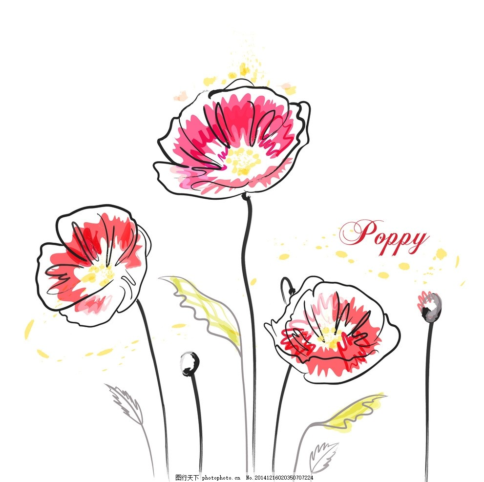 矢量罂粟花 罂粟花线条花 手绘花朵 线条花朵 时尚花纹花朵 花纹背景