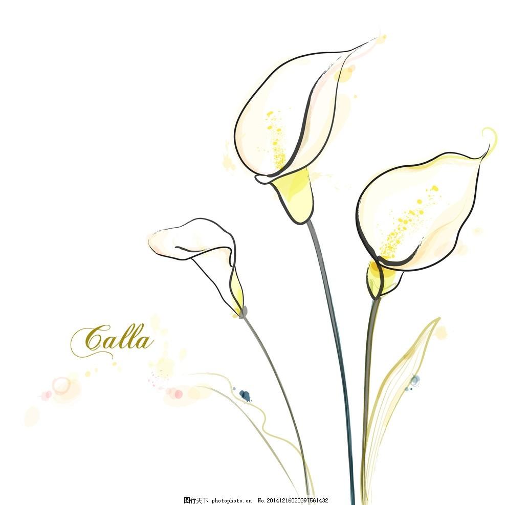 手绘矢量马蹄莲线条花朵