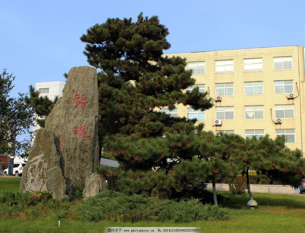 松树 石碑 校园 秋天 植物 摄影 自然景观 山水风景 72dpi jpg