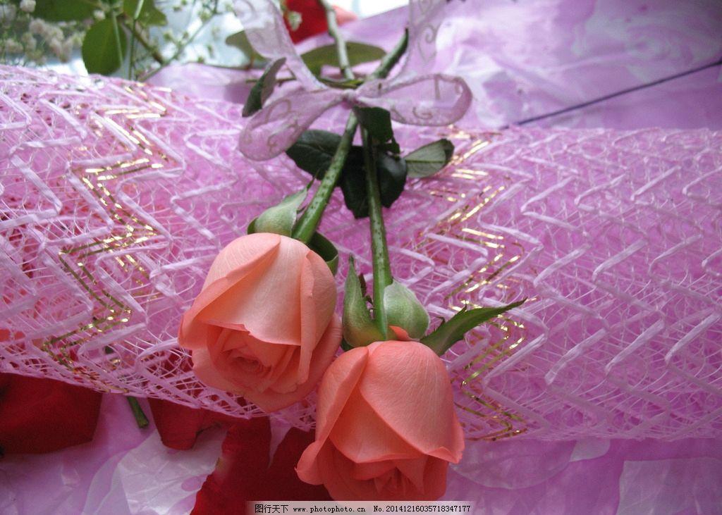 粉玫瑰 玫瑰花 红玫瑰 两支玫瑰 花卉 鲜花 植物 花草 生物世界