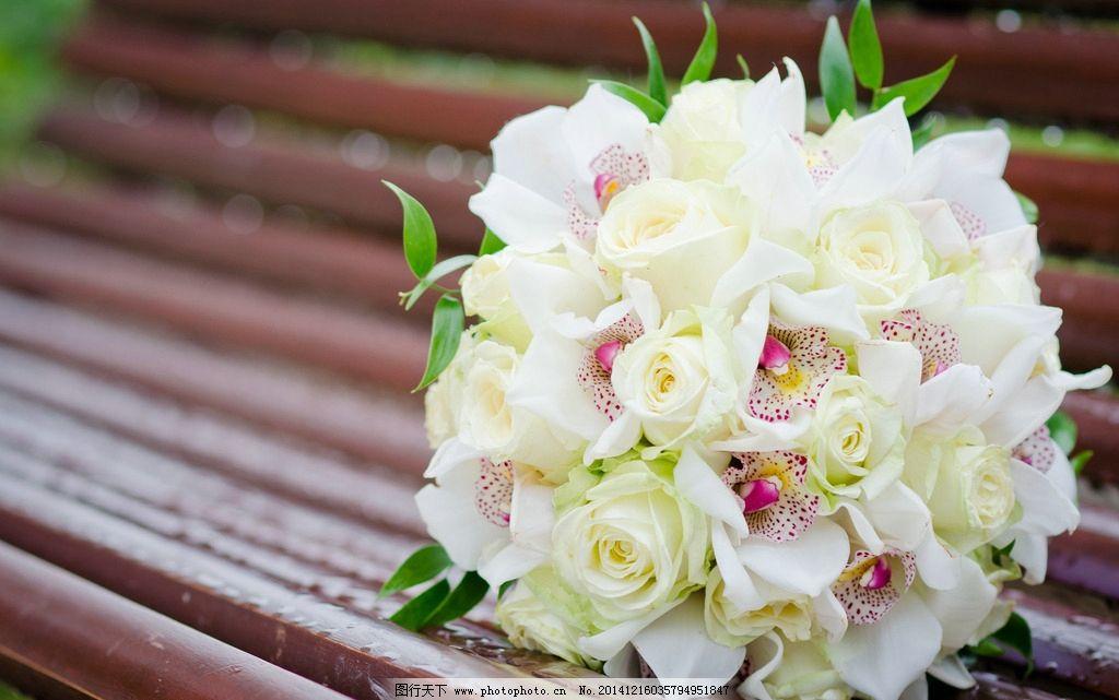 唯美白玫瑰 清新 花 植物 玫瑰花 浪漫 温馨 甜蜜 摄影
