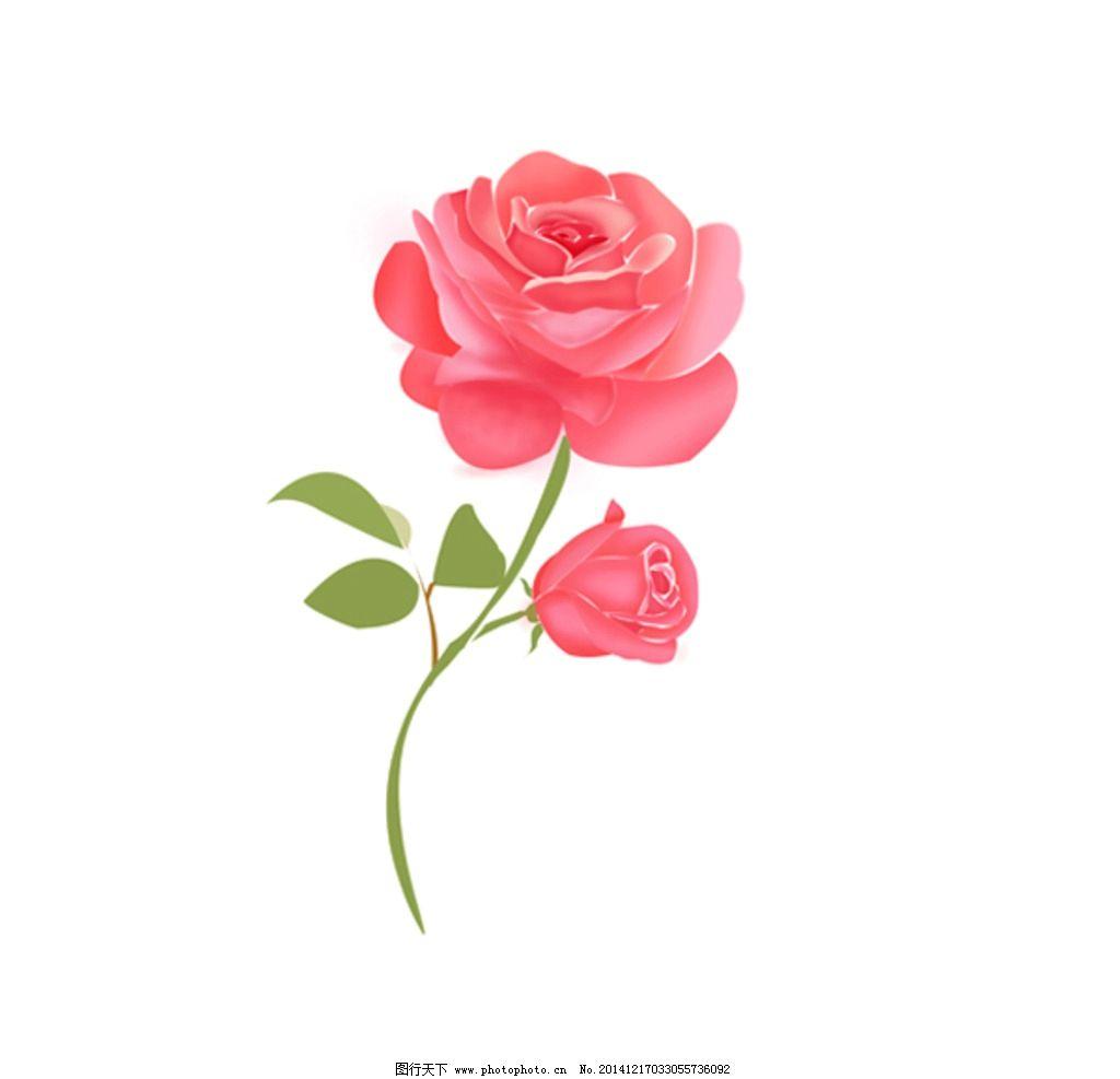 玫瑰花 手绘 电脑绘玫瑰 花卉素材 玫瑰花设计 高清玫瑰花 花卉图片