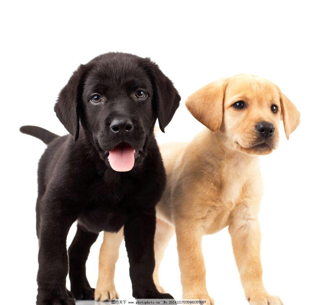 两只可爱动物图片