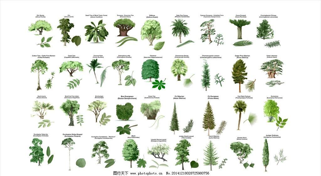 手绘 线描 矢量植物 景观手绘 环艺 环艺素材 景观植物 手绘树 手绘