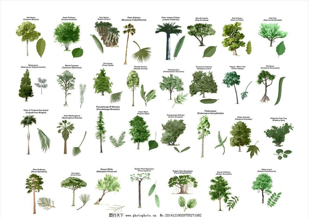 手绘植物图片_园林设计